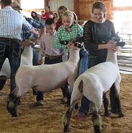 McCoy Show Lambs :: Perrysville, Ohio